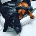 Lilly und Filou